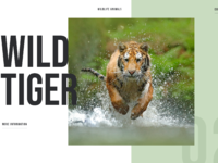 Wildlife animals concept 02