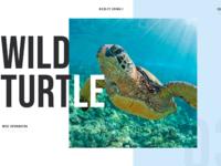 Wildlife animals concept 03