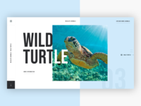 🐢 Wildlife Animals - Wild Turtle