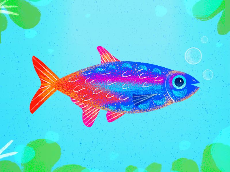 Pez arcoíris burbuja sea arcoiris bubble water pez rainbow
