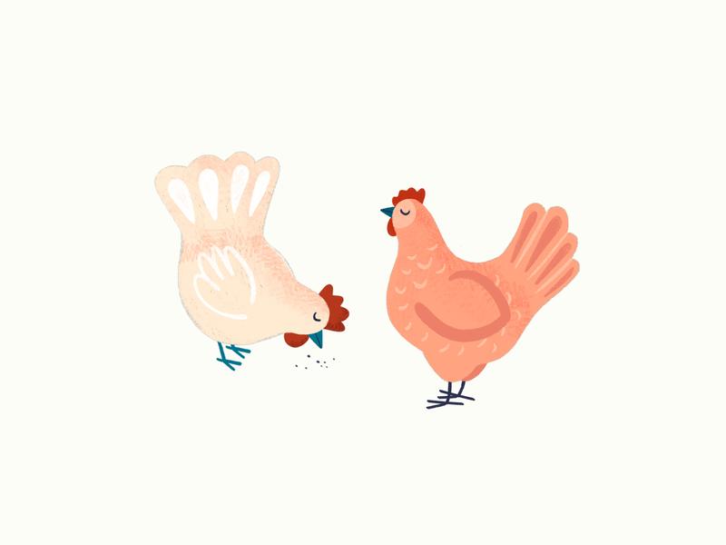 HENS animal digital illustration procreate chicken hens animal illustration illustration