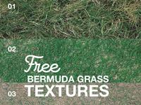 Free Bermuda Grass Textures