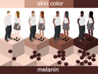 Skin Color Palette