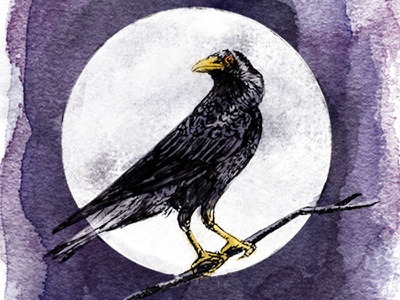 Black Crow Blackberry Wine Illustration textures watercolor feathers crow moon ink sketch messy