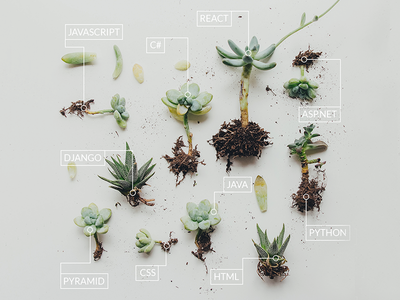 Grow Your Career - Ad grow spring garden succulents plants software development coding photoshop ad