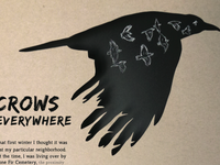 Crows Everywhere Magazine Article