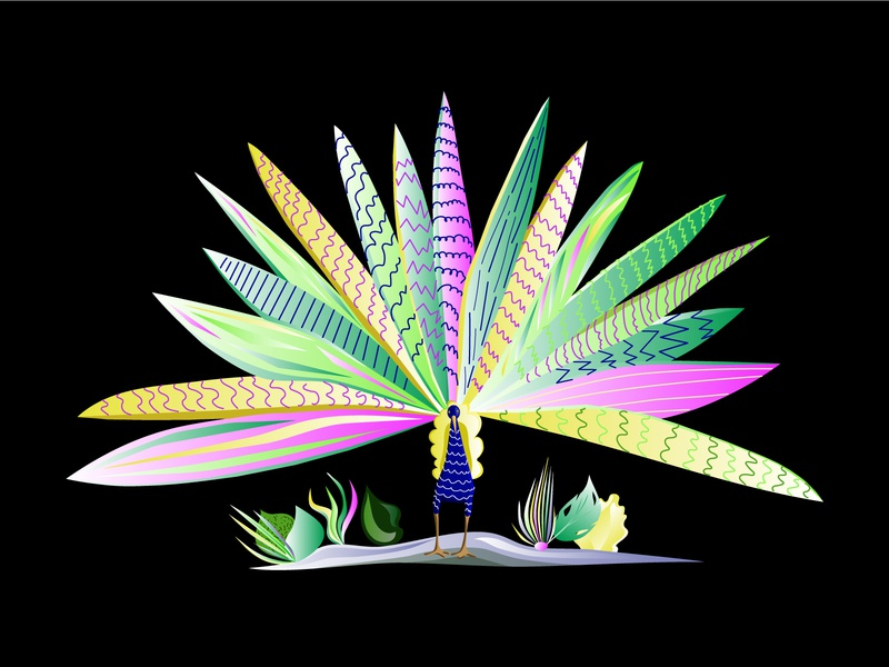 Peacock peacock print design vector illustration adobe illustrator