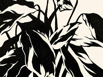 Calathea pen drawing blackandwhite ink drawing pen and ink illustration sketchbook plantdrawing plant