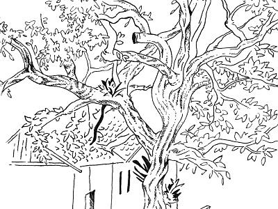 Park sketch park trees brazil illustration hand drawn drawing pen drawing black and white tree sketch sketchbook