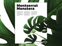 Montserrrat Monstera