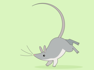 Mouse illustration animal animals mouse