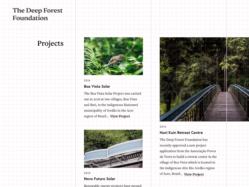 The Deep Forest Foundation grid view