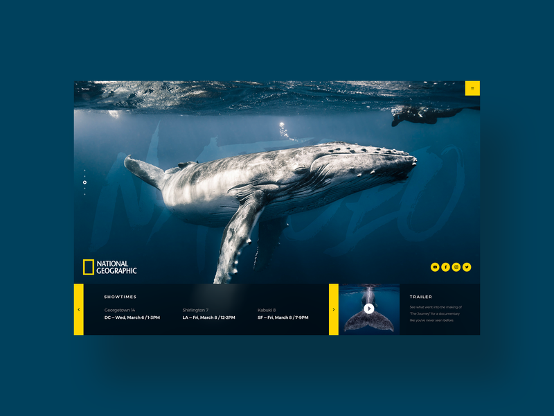 National Geographic sealife social media design challenge daily ui design simple ux design ui web design clean ui designer minimal ocean sea whale national geographic dailyui modern user interface ui design