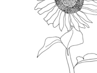 Sunflower - line work exploration