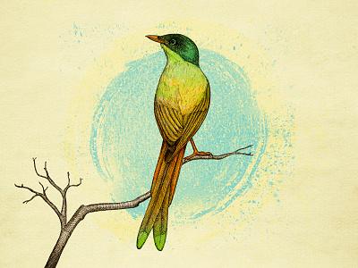 Bird hand drawn nature illustration watercolors bird sketch
