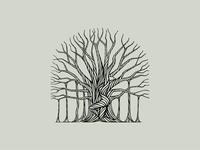 Banyan Tree's Gift illustration