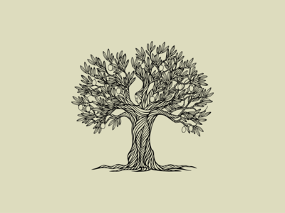 Olive Tree's Gift illustration