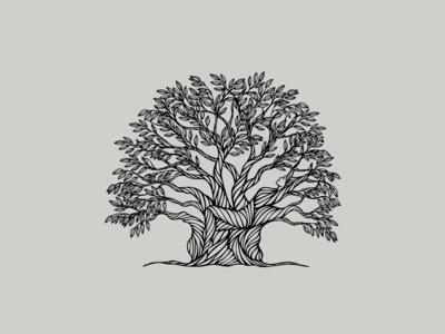Snow Gum Tree's Gift illustration