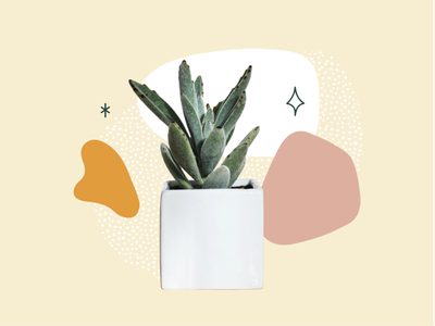 small collage asset succulent houseplant plant blobs retro collage adobe illustrator cc vector illustrator