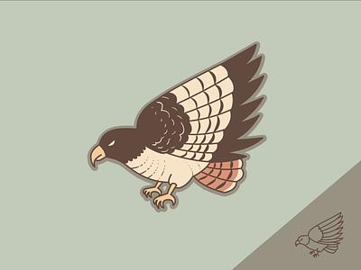 Red-tailed hawk iconography icon bird eagle hawk adobe illustrator cc vector illustration illustrator dribbbleweeklywarmup weekly challenge weekly warm-up