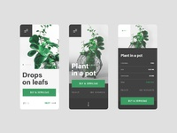2 plant