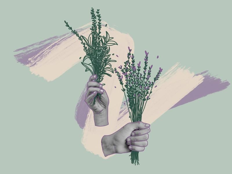 wild flowers spring garden flower photography photos procreate illustrator design illustration dribbbleweeklywarmup