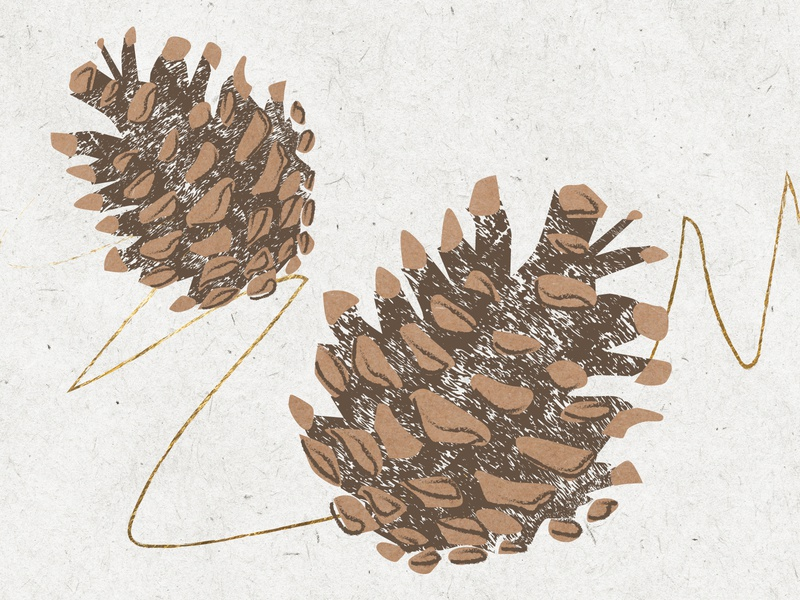 Winter Spot Illo - Pinecones winter christmas holiday abstract texture essential oils design vector illustrator illustration