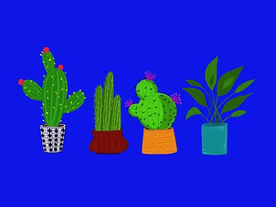 Plant pots cactus plants illustration