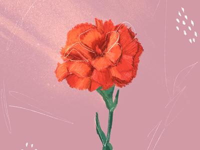 Carnation portugal carnation flower drawing design cool handmade digital illustration