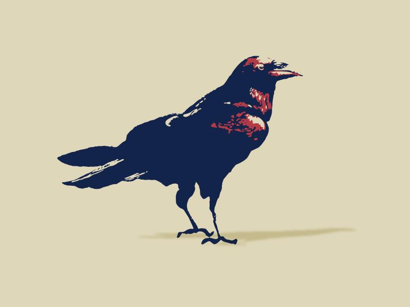 Raven fly wild illustration three color bird illustration minimal illustration bird crow raven