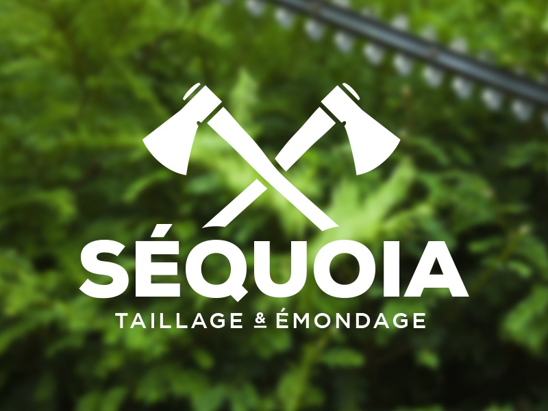Sequoia 1