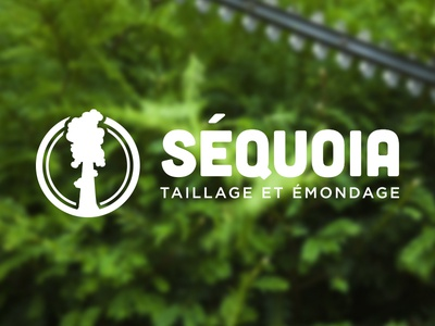 Séquoia 3