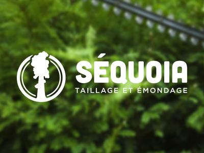 Séquoia 3 logo design logo branding identity design axe axes typo typography wood lumberjack landscaping