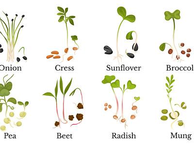 Assortment of micro greens nutrition grass organic plant realistic flat vector illustration