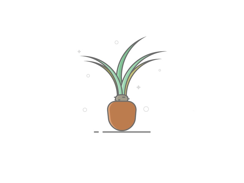 #2. Unamed Plant