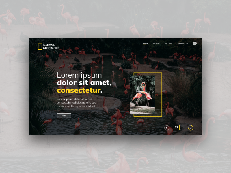 Flamingo Web Template flamingo nat geo ui ux website web design