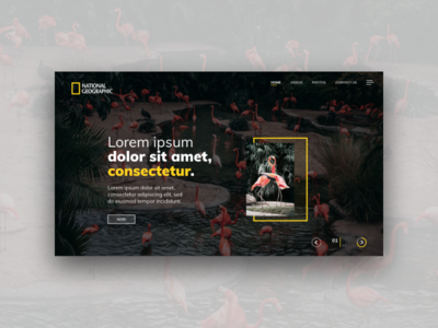 Flamingo Web Template flamingo nat geo ui ux website web design