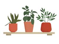 Plant pots!