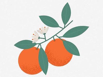 Oranges fruit graphic illustrator stippling leaf flower art illustration orange