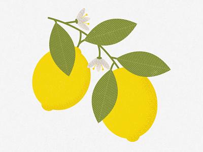 When life gives you lemons... make lemonade! lemon vector leaf fruit flowers leaves floral graphic graphics pattern illustrator print design illustration