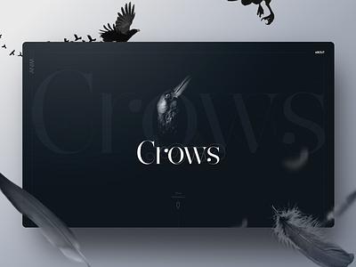 Animal Landing page : Crow crow black theme animals webpage birds graphic homepage web design webdesign design inspiration ui landing page