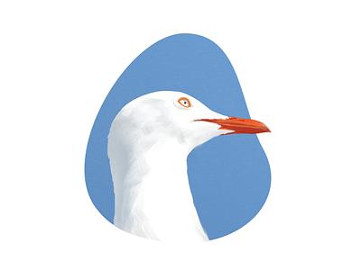 Stare illustration sea gull zklm0000 colour art painting