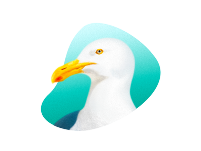 Stare 2 painting art colour zklm0000 sea gull illustration