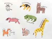 Color pencil doodle practice #1