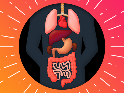 Human Internal Organs illustration lungs intestines liver stomach anatomy internal heart body organ man human