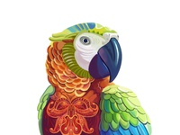 Macaw Illustration