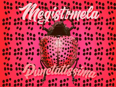 Ladybug typography illustration style photoshop bug beetle
