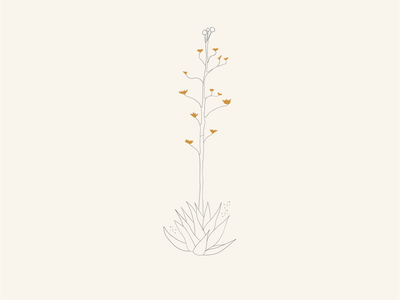 West Texas Century Plant vector icon minimal branding illustration design