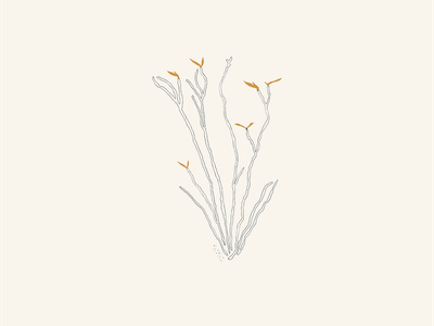 West Texas Ocotillo icon vector illustrator minimal illustration design