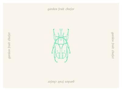 Coleoptera - Garden Fruit Chafer coleoptera beetle logo vector illustrator minimal illustration design